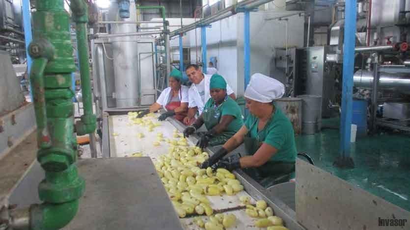 Producción de papas
