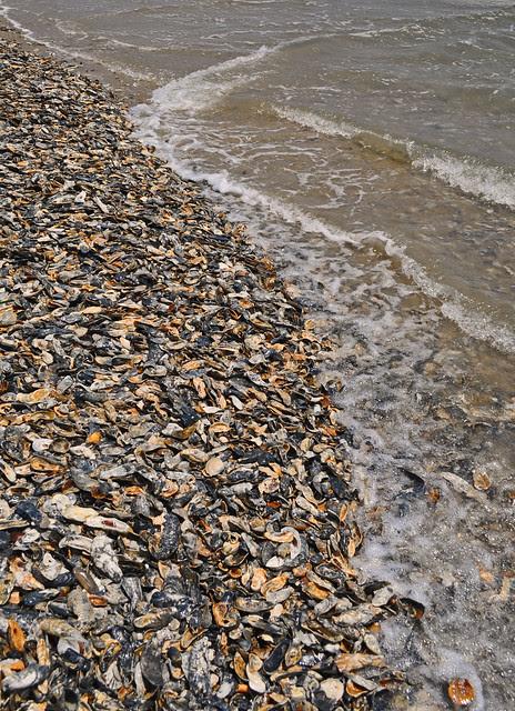 Wahed Shells (2)