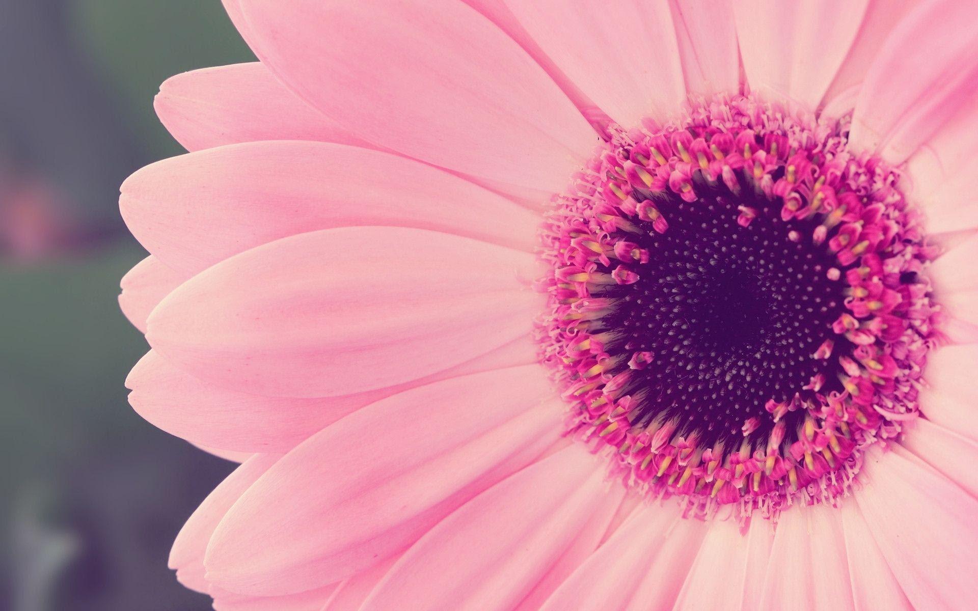 Free Pink Wallpapers For Desktop  Wallpaper Cave