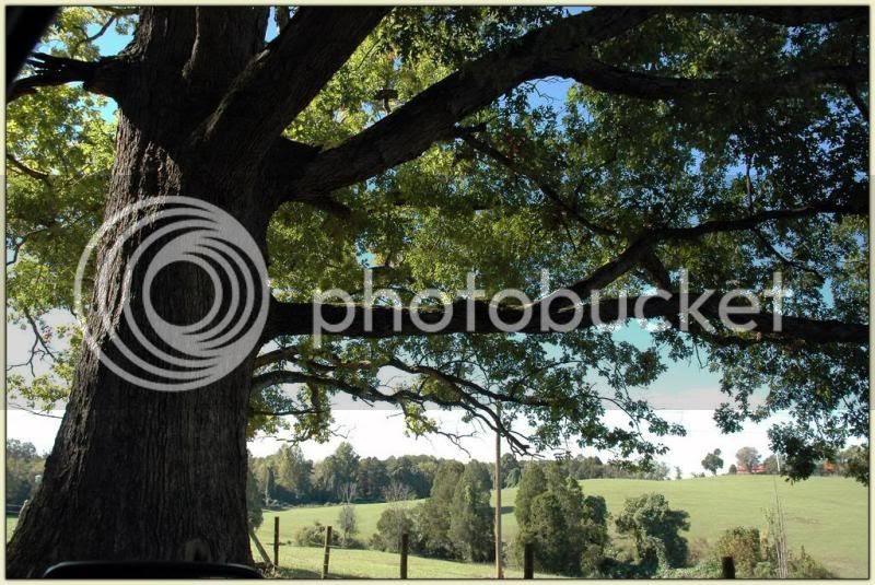 Kaboom Tree