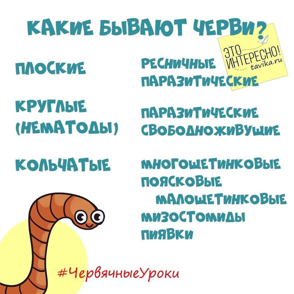 Классификация червей