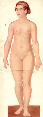 anatom37 1