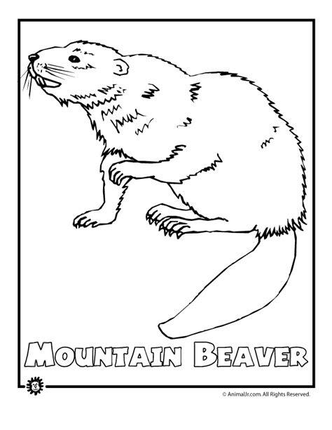 endangered mtn beaver woo jr kids activities