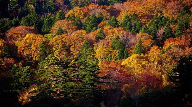 Autumn-HD-Wallpaper-7