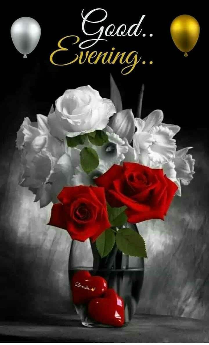 White And Red Good Evening Roses Pictures Photos And Images For
