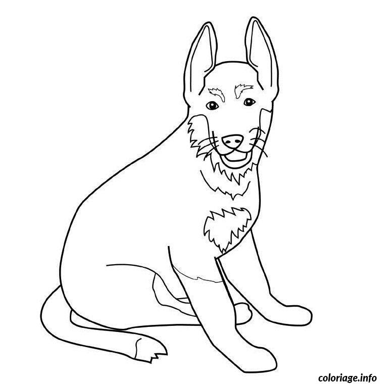 Coloriage Chien Berger Allemand Jecoloriecom
