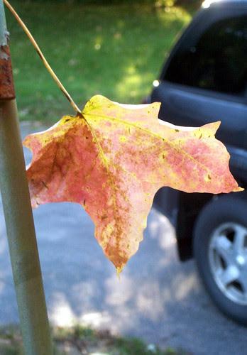 Leaf_10810
