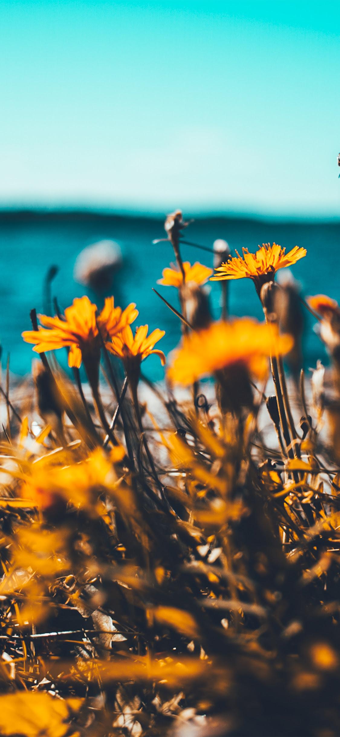 Nu64 Flower Summer Spring Nature Wallpaper
