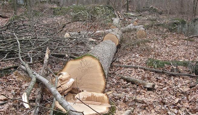 http://climaticocambio.com/wp-content/2012/07/La-humanidad-empezao-a-causar-el-cambio-climatico-antes-de-la-Revolucion-Industrial-.jpg
