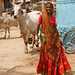 Patan Woman with Cows