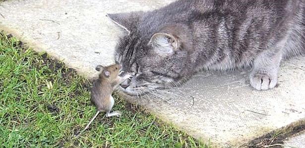 Tom e Jerry da vida real se confrontam no jardim de Stephanie, no Reino Unido