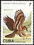 Extinct Eagle sp Aquila borrasi