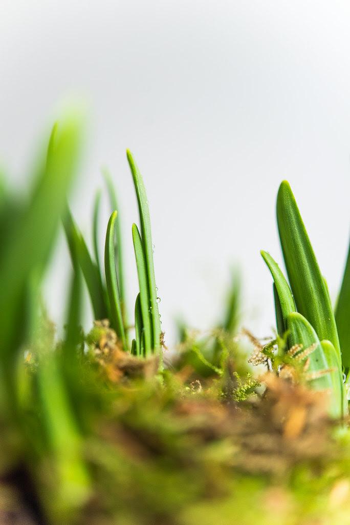 first_spring (9 von 12)