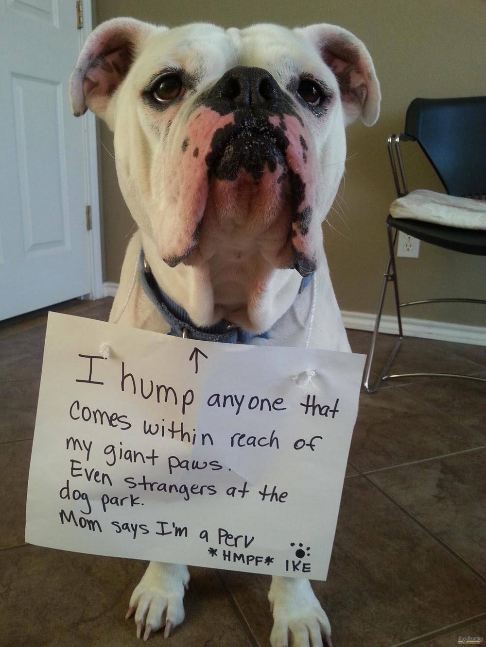 dog shaming 19 32 Hillarious Public Shaming of Dogs