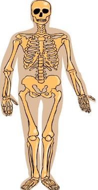 El cuerpo humano. Actividad para Educación Especial
