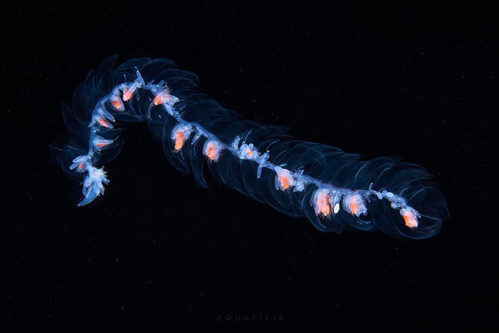 perierga.gr - Άγνωστα πλάσματα του βυθού σε υπέροχες εικόνες!