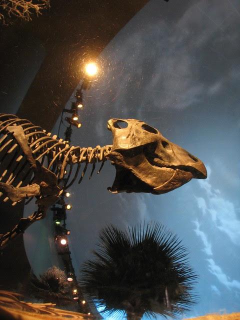 Prenooceratops