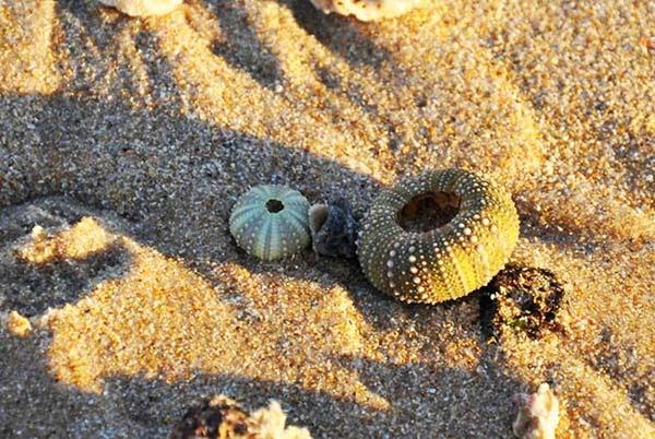 http://perierga.gr/wp-content/uploads/2012/08/shellbeach7.jpg