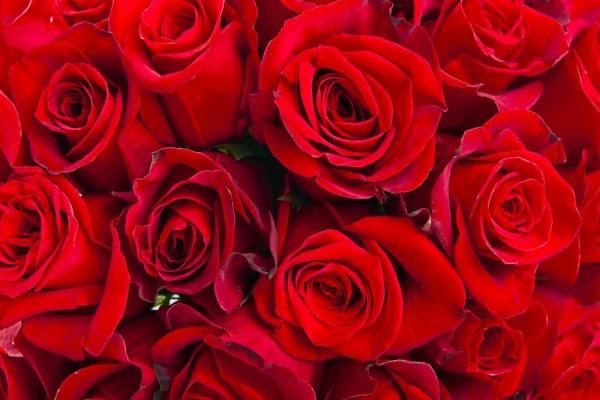 Pimpollos De Rosas Rojas 30696