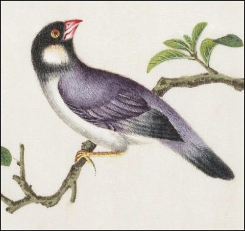 Bird Album a (detail)