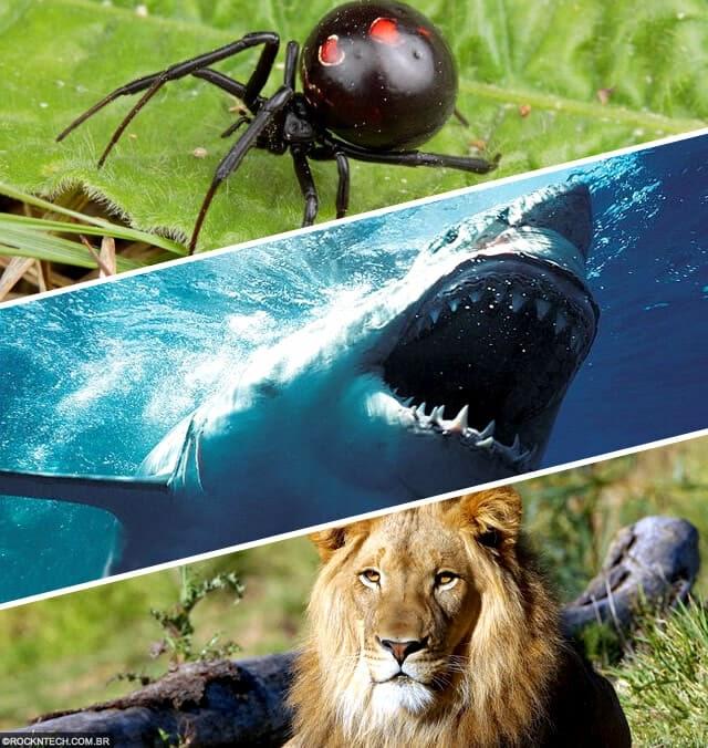 A classificação dos seres vivos