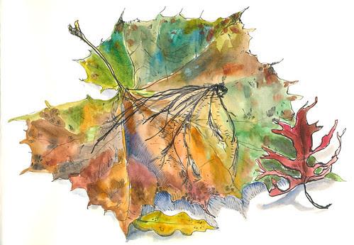 November 2013: Treasures by apple-pine