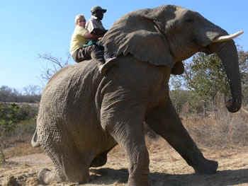 elephantride.jpg (51807 bytes)