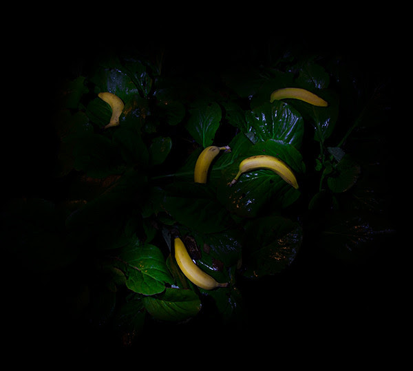 banaanit_sRGB