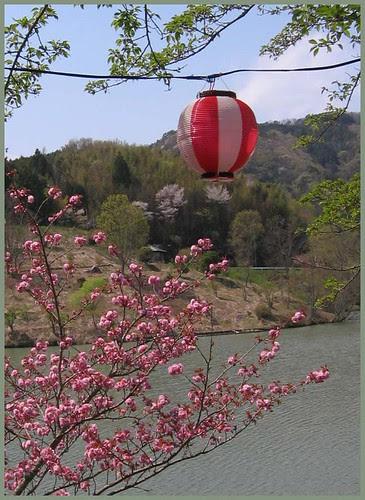 023 cherry blossom festival