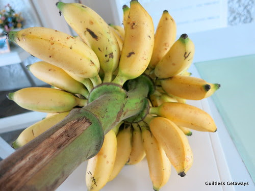 senorita-banana.jpg