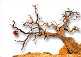 Can a bad tree bring forth good fruit?