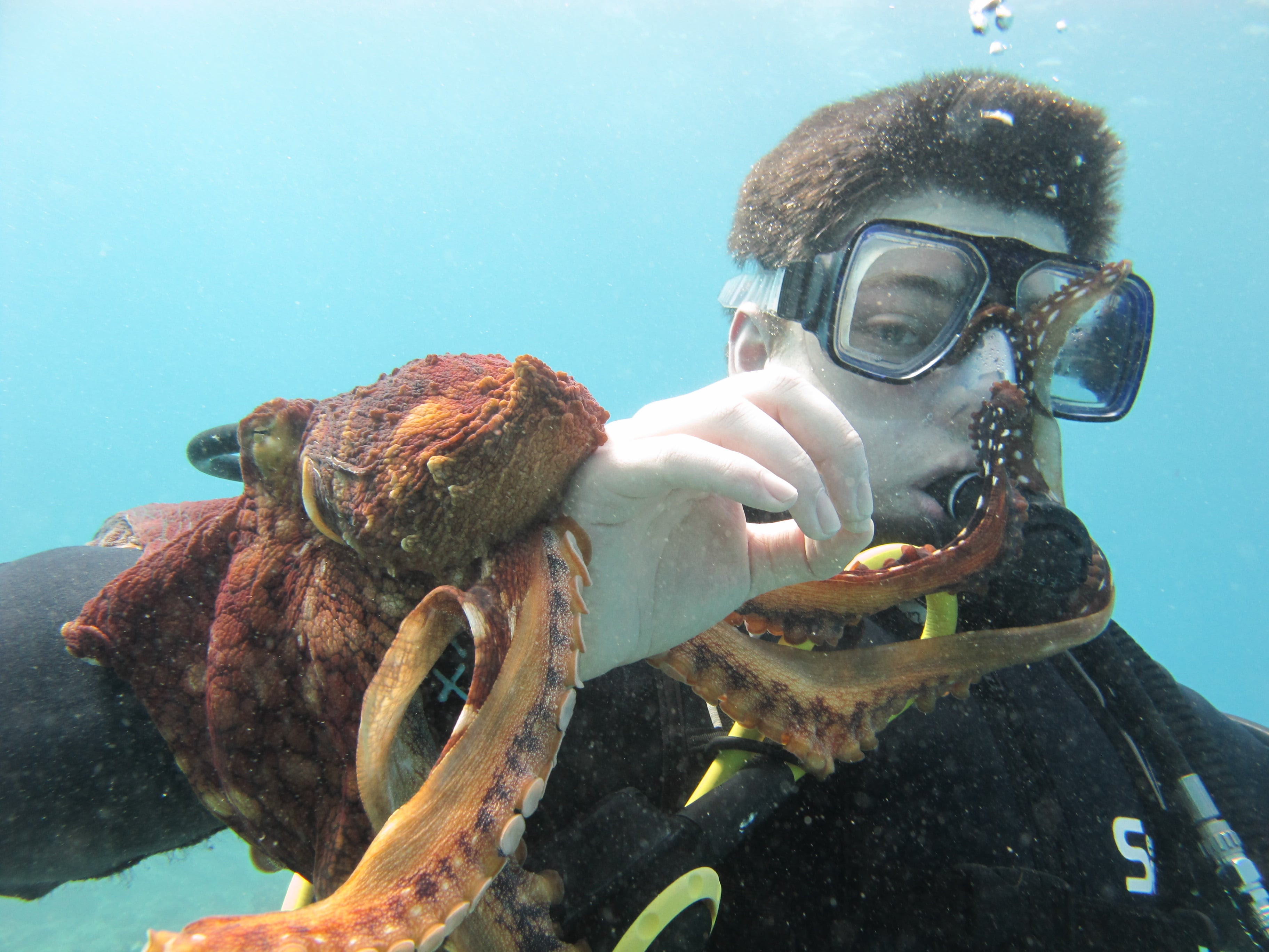 Watch the incredible moment an OCTOPUS launches a surprise