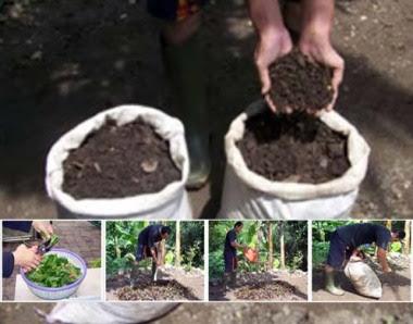 membuat kompos dari limbah rumah tangga