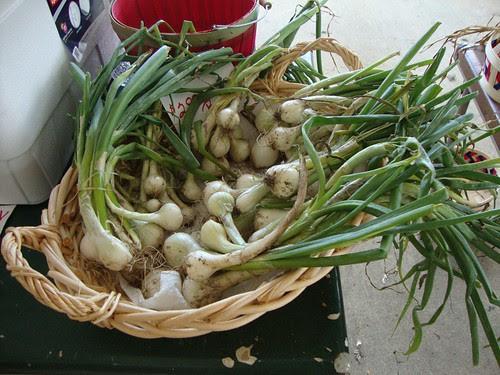 Shreveport Farmer's Market by trudeau