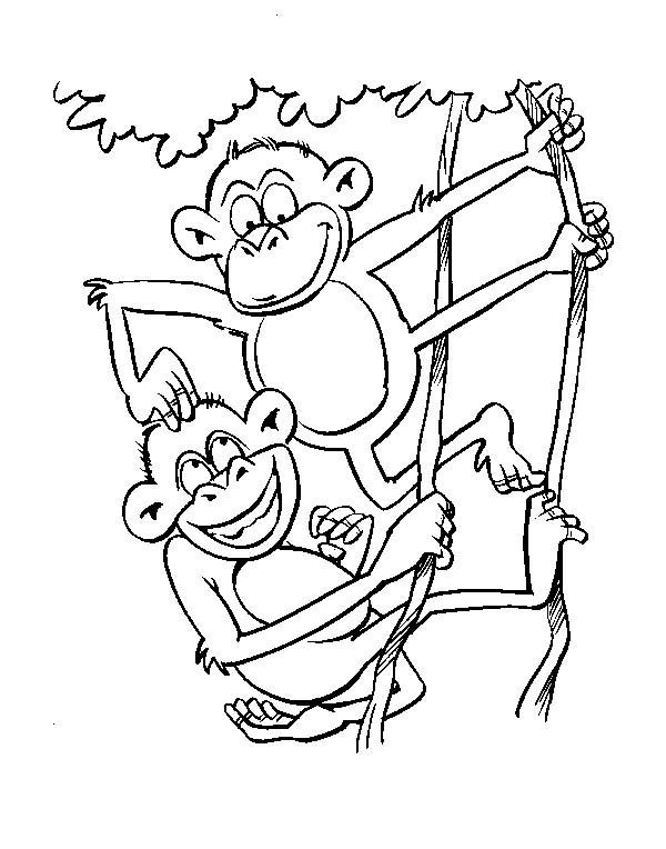 Scimmie 3 Disegni Per Bambini Da Colorare