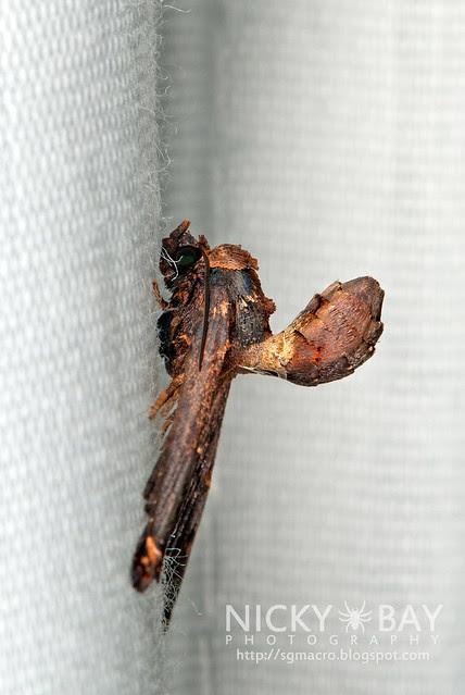 Moth - DSC_3861