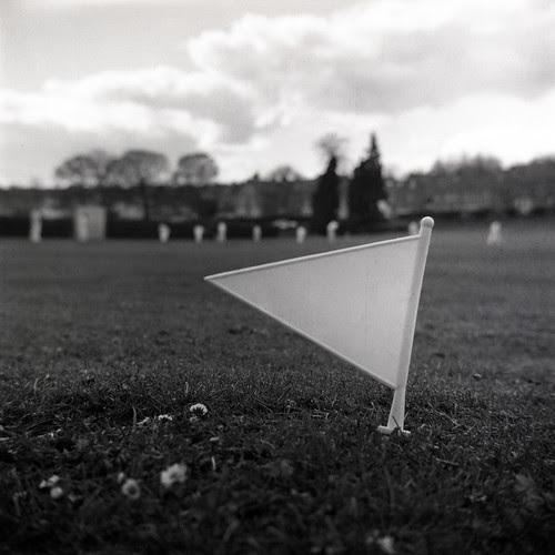 cricket by pho-Tony