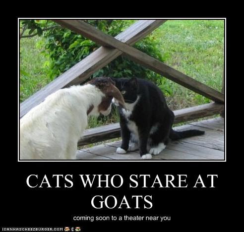 photo of a cat staring at a goat