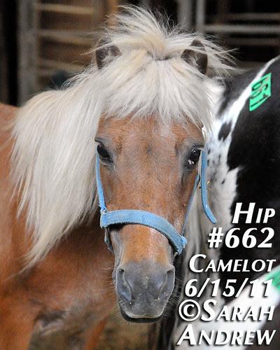 Hip #662
