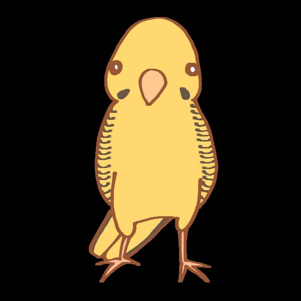 黄色いインコのイラスト かわいいフリー素材が無料のイラストレイン