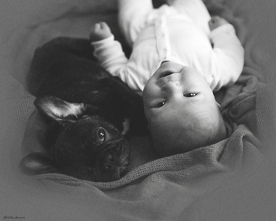bebe_y_bulldog_8