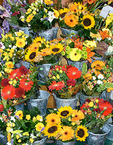 Many potted plants with colorful array of flowers