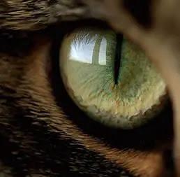 ojo-gato