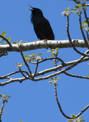 Pájaro negro by JoseAngelGarciaLanda