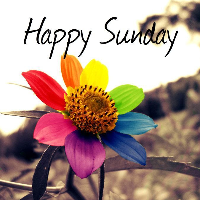 Happy Sunday Colorful Flower Pictures Photos And Images For