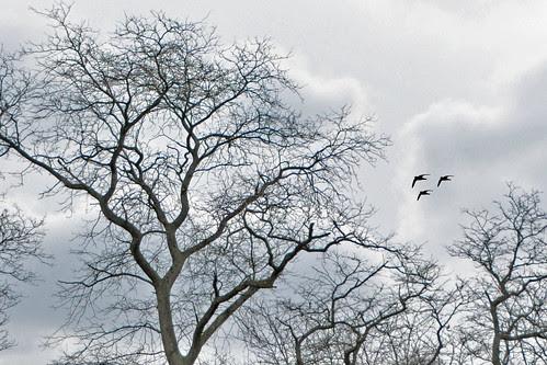 83_365 Barren Trees