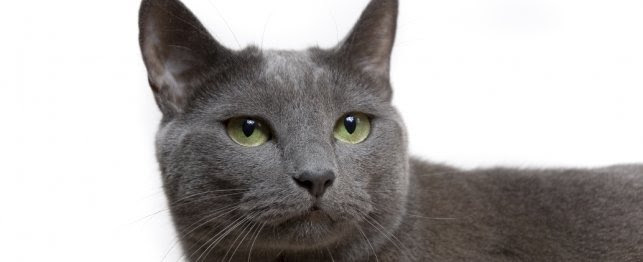 Free Download Names For Gray Cats Boy - Cat Picture