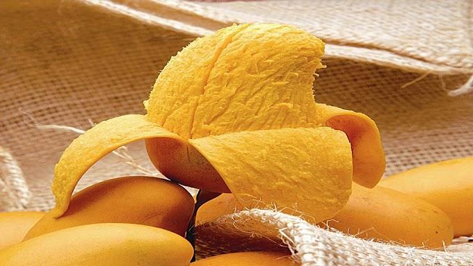 Investigadores mexicanos concluyen que cáscara de mango contiene propiedades cicatrizantes