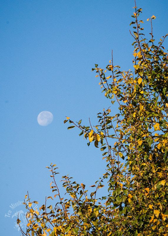 UNUSED, The Moon AND Sun shine in the day this time of year.