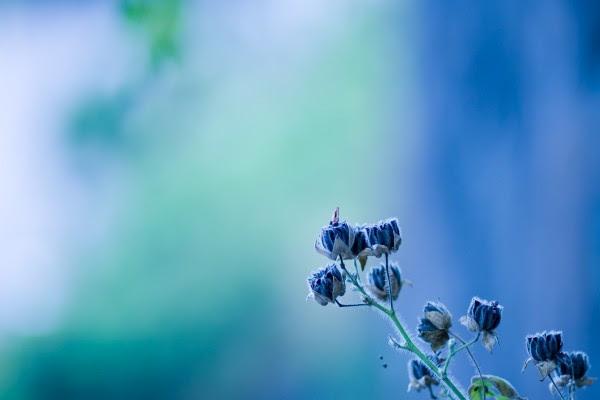 Ramita Con Flores Azules 16378